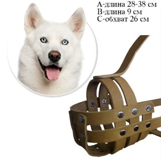 Кожаный намордник для Лайки, размер 26 см, прогулочный, натуральная кожа, изготовление на заказ