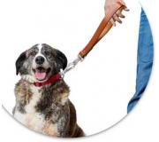 Короткий поводок для собаки