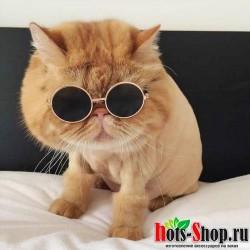 1 шт., горячая распродажа, очки для собак, товары для домашних животных, очки для кошек, очки для собак, реквизит для фотографий, аксессуары для животных принадлежности, очки для кошек