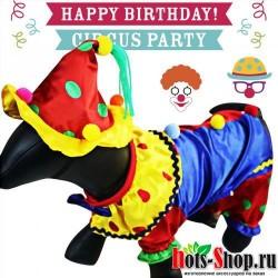 Домашний костюм на день рождения куртка со шляпой и кошкой Рождество клоун, поставщик собак 45