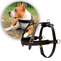 Шлейка для собаки ездовая
