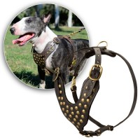 Покупаем шлейку для собак (sh0007)