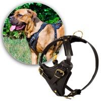 Шлейки для собаки (sh0008)